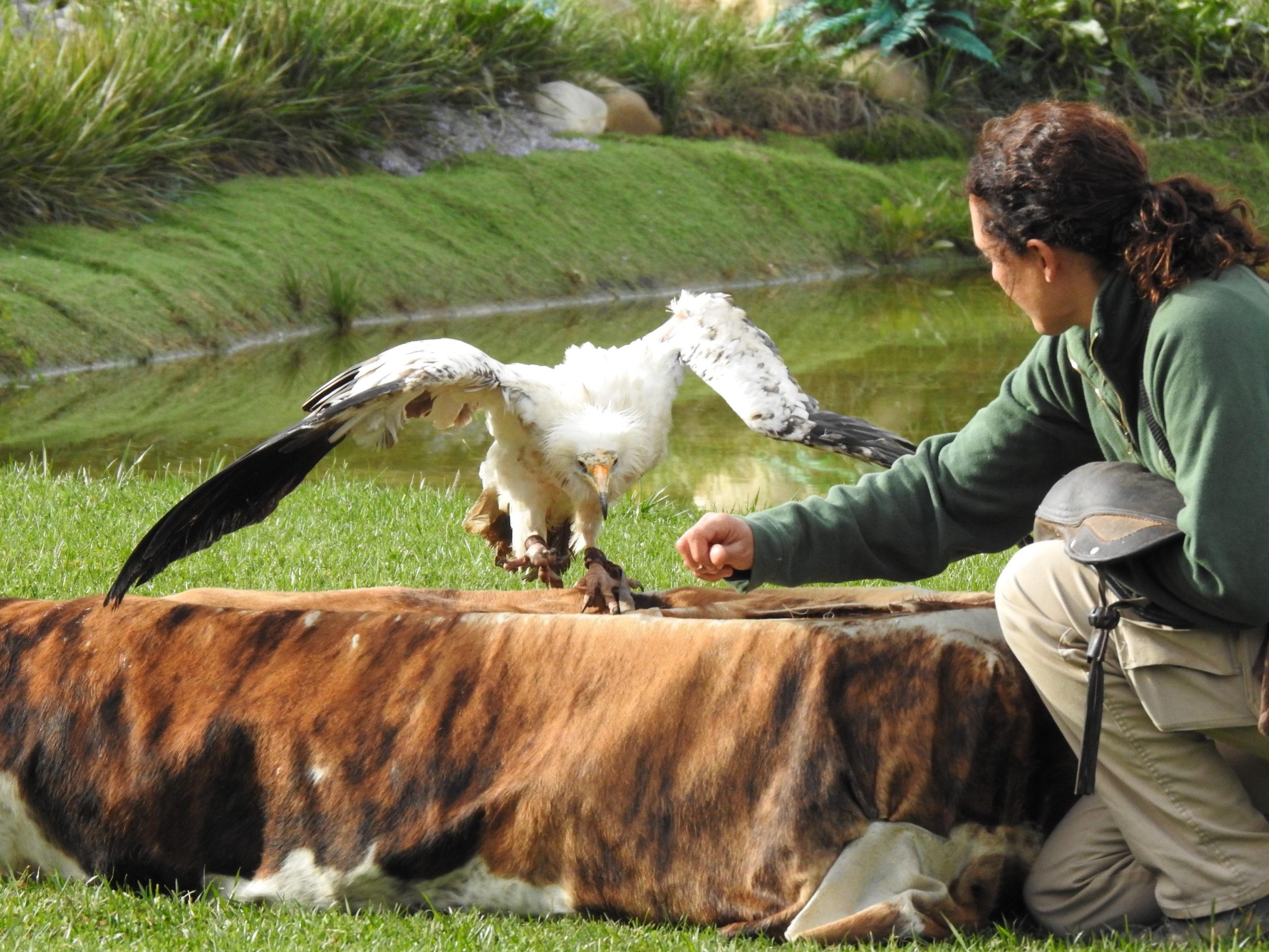 Gaspar, enriquecimiento ambiental con bióloga del parque Tierra Rapaz